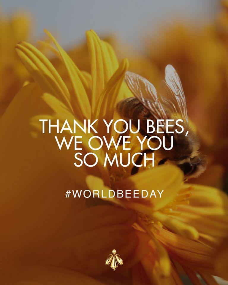 蜜蜂-嬌蘭