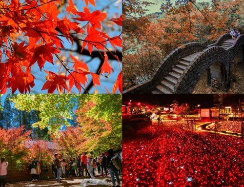 【放放/放玩】這裡真的不是日本!秋天賞楓季~偽出國台灣賞楓打卡網美景秘境景點!你去過幾個?~