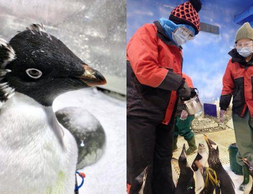 【放放/放玩】屏東海生館推出「我與企鵝的0.1毫米」餵食體驗!KLOOK獨家販售,讓人一秒到南極